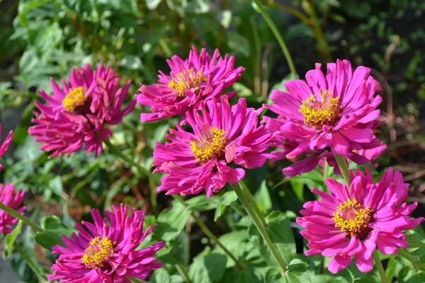 Czy zakładanie ogrodów jest proste?