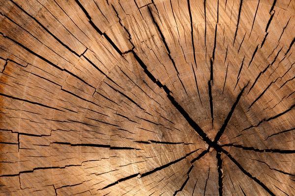 Plan wycinki drzew przy drogach w okolicy Rybnika