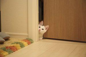 Dobre drzwi zewnętrzne dla Twojego domu